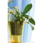 OrchideaMalaKruh
