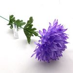 chryz-fialova