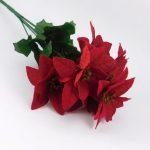 kytica vianočná ruža