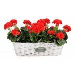 Prútený košík na kvety HOME biely obdĺžnik2
